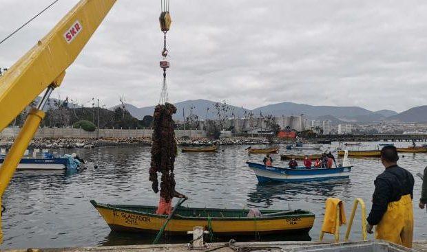 Acuicultura de pequeña escala, algas, borde costero, desembarque (foto Indespa)