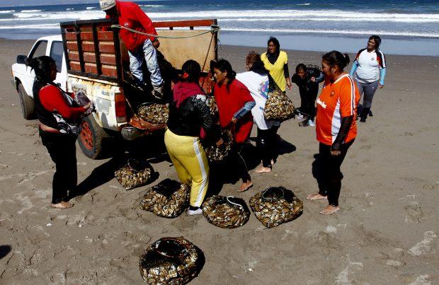 Firman convenio que busca apoyar a mujeres de la pesca artesanal (foto Subpesca)
