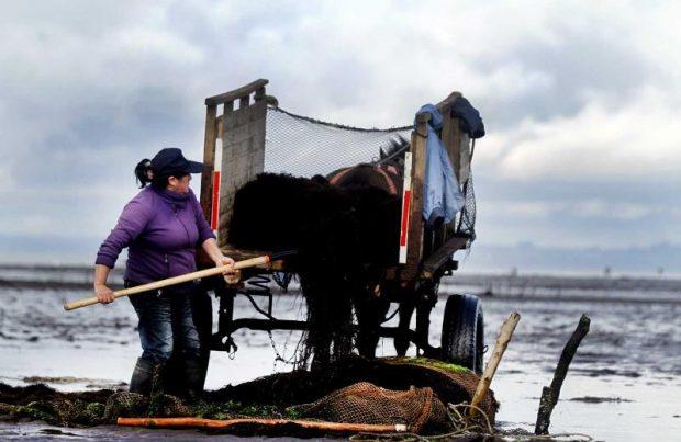 Subsecretaria crea canal de comunicación con mujeres de la pesca artesanal (foto Subpesca)