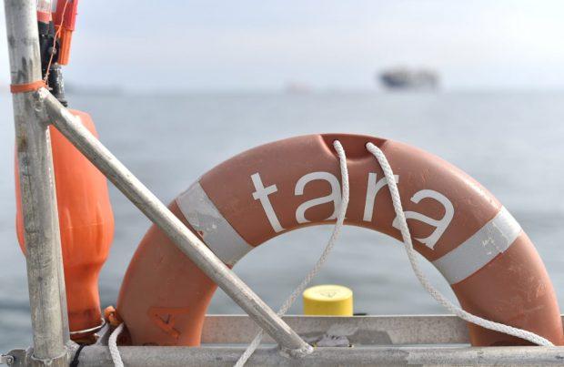 """""""Tara"""" se encuentra en Iquique, última escala de la expedición en Chile"""