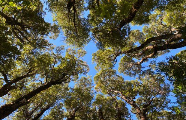 Organizaciones piden que la nueva Constitución consagre la protección de la naturaleza y reconozca el valor ambiental de la Patagonia (foto Alejandra Sáenz)