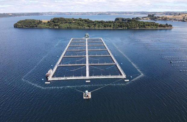 Industria acuícola lidera uso del beneficio tributario de I+D en Chile (foto LOWO2)