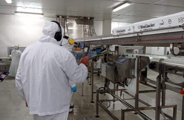Vía remota: Autoridad rusa inspeccionó planta de proceso de salmones (foto: Sernapesca)